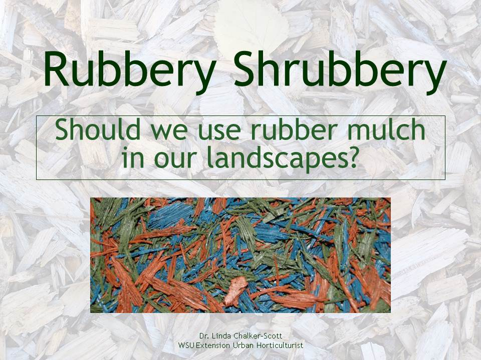 Title Slide: Rubbery Shrubbery