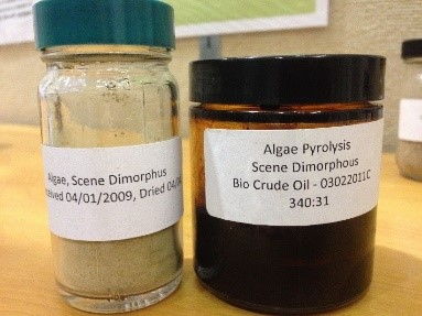 dried grounded algae in a bottle and another bottle with oil produced from the ground algae