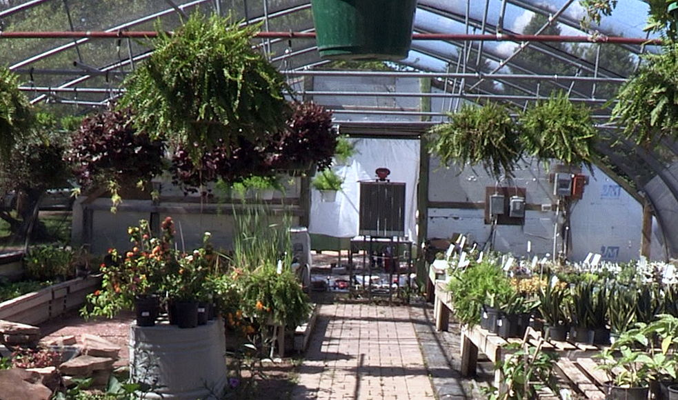 inside a greenhouse with plants