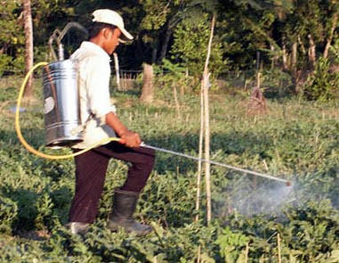 worker with canister on his back that contains chemicals he is spraying on the farm field